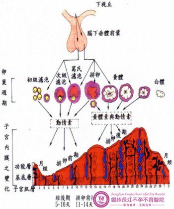 性激素六项检查有哪些
